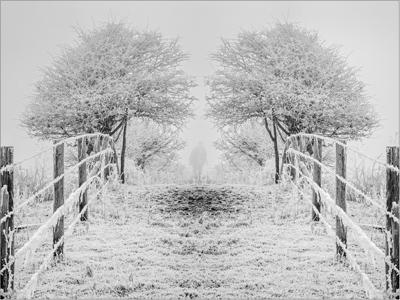 Walk in Winter Mist