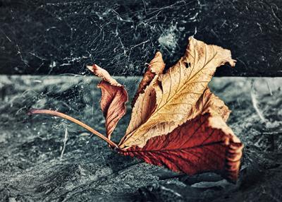 Caught in a cobweb