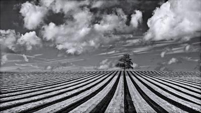 Striped Landscape