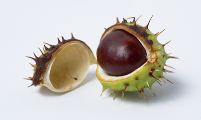 Just a Conker