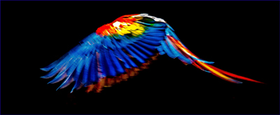 Flight of the Red Macaw