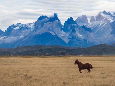 Criollo horse Torres del Paine